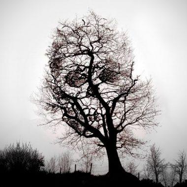Το ξεριζωμένο δέντρο
